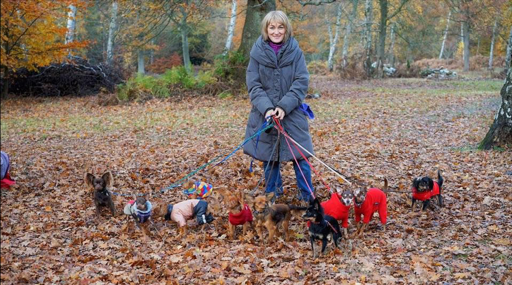 Regional Dog Shows for All Breeds